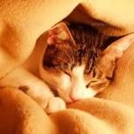 話題の 毛布の使い方